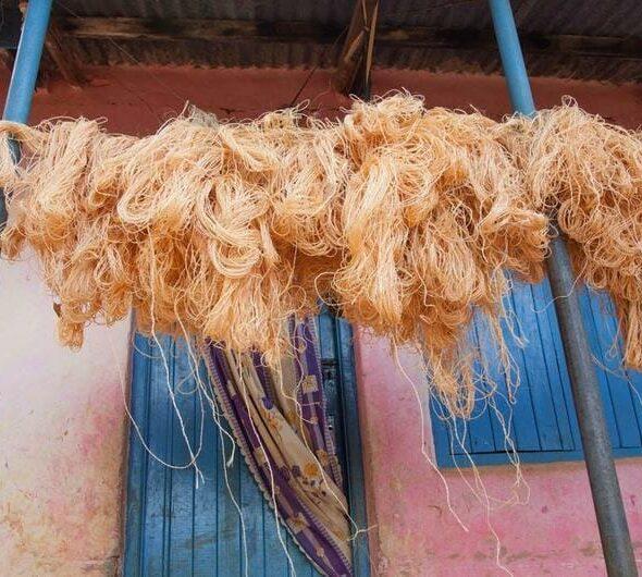 Processo di essiccazione del sisal, materiale ecologico per produrre ceste africane